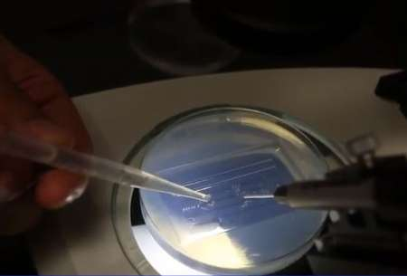 petri dish in a lab setting